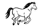 pferd___
